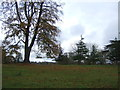 SJ5350 : Parkland, Cholmondeley Castle by JThomas