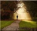 SO6212 : November morning, Forest of Dean, 1 by Jonathan Billinger