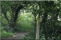 TQ5044 : Footpath junction by N Chadwick