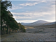 NH3154 : The frosted south side of Strathconon near Milton by Julian Paren