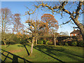 SU8188 : Orchard at Woodend House by Des Blenkinsopp