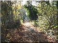 TQ4476 : Old trackway on Woodlands Farm by Marathon
