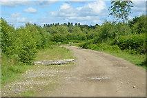 TQ5345 : Track in Penshurst Park by N Chadwick