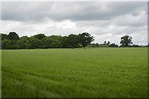 TQ5346 : Grassland by Price's Wood by N Chadwick