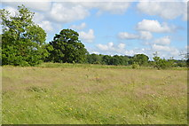 TQ5145 : Floodplain meadow by N Chadwick