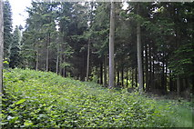 TQ5246 : Redleaf Wood by N Chadwick