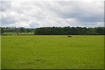TQ5347 : Flat grassland by N Chadwick