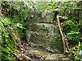 TQ7525 : Sandstone face in Stone Rock Gill by Patrick Roper