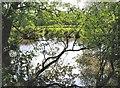 TQ7525 : Pond by Bourne Lane by Patrick Roper