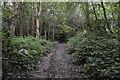 TQ6441 : High Weald Landscape Trail by N Chadwick