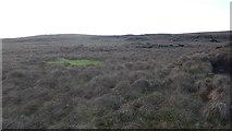 NS6680 : Bog, Kilsyth Hills by Richard Webb