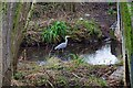 SP0581 : Heron in the River Rea, Stirchley, Birmingham by P L Chadwick