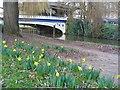 SU9949 : December Daffodils by Colin Smith