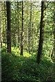 SX0967 : Callywith Wood by Derek Harper
