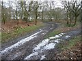 SE4208 : Frost on the track, Houghton Common by Christine Johnstone