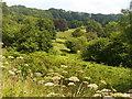SU7428 : Oakshott Stream Valley by Colin Smith