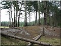 TG4500 : Montana pines in Fritton Wood by Evelyn Simak