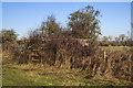 SU1515 : WWII Hampshire - Ringwood Stop Line, Avon Valley - Fordingbridge anti-tank island (33) by Mike Searle