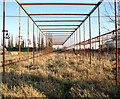 TG2809 : The skeleton of a greenhouse by Evelyn Simak