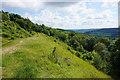 ST7966 : Open patch on the side of Bathford Hill by Bill Boaden