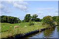 SJ6640 : Canalside grazing north of Adderley, Shropshire by Roger  Kidd