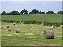 SP8307 : Ellesborough - Hay Bales by Colin Smith