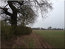 SP6830 : Path around Hillesden by Dave Thompson