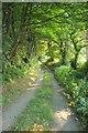 SX0862 : Lane to Coombe Farm by Derek Harper