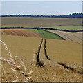 SU4683 : Sheep Down by Rudi Winter