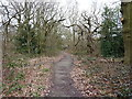 SP0391 : Oxhill Road through the woods by Richard Law