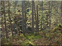 NH6590 : Steep woodland beside the Spinningdale Burn by Julian Paren