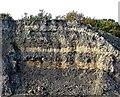 TQ7109 : Wealden strata in Bexhill Brick Pit by Patrick Roper