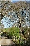 SX1553 : Lane at Trethake by Derek Harper