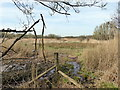 TQ7709 : Filsham Reedbeds - Combe Valley Countryside Park by PAUL FARMER