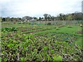 SJ7469 : Plant beds, north of Middlewich Road by Christine Johnstone