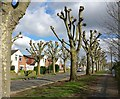 SK5801 : Heathcott Road in Leicester : Week 14