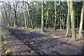 SU6983 : Track through Greyhone Wood by Roger Templeman