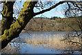 NX6766 : Woodhall Loch : Week 14