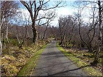 NG8778 : Birch woodland near Inveran by Richard Law