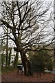 TQ5839 : Princess Anne's Oak by N Chadwick