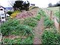 NO2507 : Path in Falkland by Bill Kasman