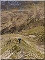NH0849 : Hillside above the Alltan na Feòla by Richard Law