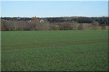 TL3858 : Cambridgeshire crop by N Chadwick