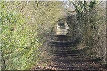 TL3858 : Whitwell Way by N Chadwick