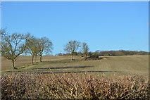 TL4058 : Hedge and farmland by N Chadwick