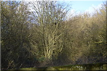 TL4158 : Woodland by the M11 by N Chadwick