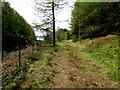 SN8443 : Track into woodland at the northern edge of Carmarthenshire by Jaggery