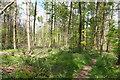 SU8193 : Jane's Wood by Des Blenkinsopp