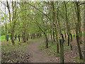 SE0336 : Footpath through Ives Plantation by Stephen Craven