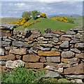 SD5575 : Dry stone wall near Keer Side : Week 20